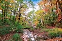 Autumn at Hopkins Pond Fine-Art Print