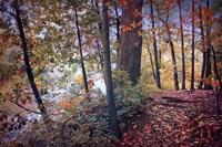 Season of Colors Fine-Art Print