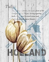 Holland Tulips Fine-Art Print