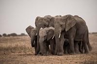 Elephant Family Fine-Art Print