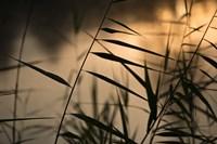 Twilight Grasses Fine-Art Print