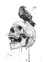 New Skull Fine-Art Print