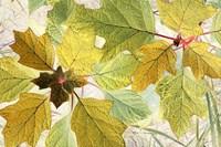 Golden Oak Fine-Art Print