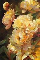 Peonies for Springtime Fine-Art Print