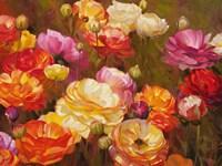 Ranunculus Garden Fine-Art Print