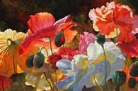 Summer Radiance Fine-Art Print
