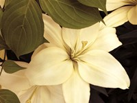 Lily and Leaves Fine-Art Print