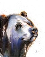 Bear Portrait Fine-Art Print