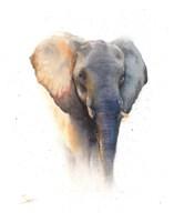 Elephant Watercolor Fine-Art Print