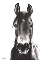 Horse Portrait Fine-Art Print
