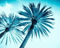 Chic Palms Fine-Art Print