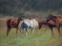 Southern Horses Fine-Art Print