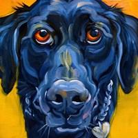 Black Dog Fine-Art Print