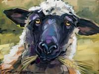 Bless Ewe Fine-Art Print
