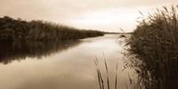 River Reeds Fine-Art Print