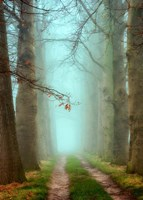 Blue Mist Fine-Art Print
