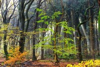 Colors of the Forest IV Fine-Art Print