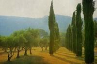 Cypress Shadows Fine-Art Print