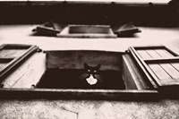 Dali the Cat Fine-Art Print