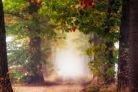 Fall Colors Fine-Art Print