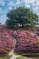 Purple Heath Fine-Art Print