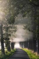 Rays of Fog Fine-Art Print