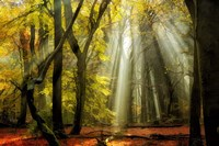 Yellow Leaves Rays Fine-Art Print
