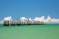 Gull Conference Fine-Art Print