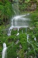 Moss Waterfall Fine-Art Print