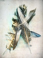 Feather Study No. 5 Fine-Art Print