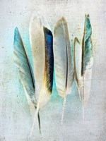 Feathers Turquoise Fine-Art Print