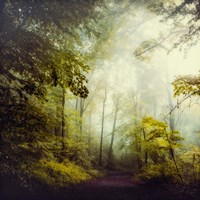 Glorious Woods Fine-Art Print