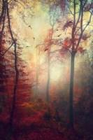 Haze Fine-Art Print