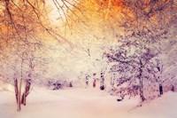 Snowy Sunrise Fine-Art Print