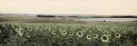 Andalusian Sun Flowers Fine-Art Print