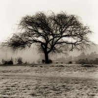 Willow Tree Fine-Art Print
