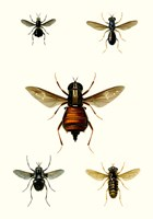 Entomology Series III Fine-Art Print