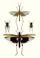 Entomology Series VI Fine-Art Print