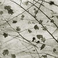 Laced Sky II Fine-Art Print