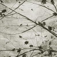 Laced Sky IV Framed Print