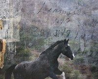 Horse Exposures I Fine-Art Print