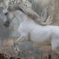 Horse Exposures IV Fine-Art Print