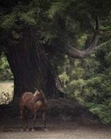 Horse in the Trees II Fine-Art Print
