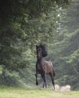 Horse in the Trees III Fine-Art Print