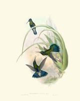 Hummingbird Delight VI Fine-Art Print