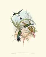 Hummingbird Delight VII Fine-Art Print