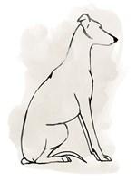 Greyhound Sketch I Fine-Art Print