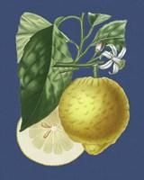 French Lemon on Navy I Fine-Art Print