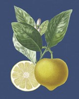 French Lemon on Navy II Fine-Art Print
