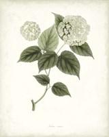 Sage Botanical I Fine-Art Print